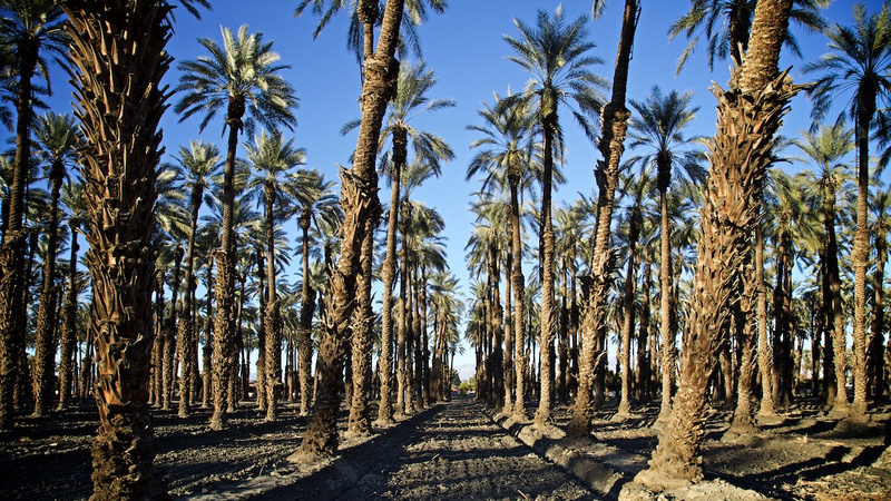 Palm Grove off Airport Blvd - Thermal, CA - 2015