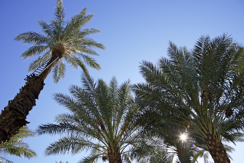Palms, Ladder & Sunstar - Shields Date Garden - Indio, CA - 2016