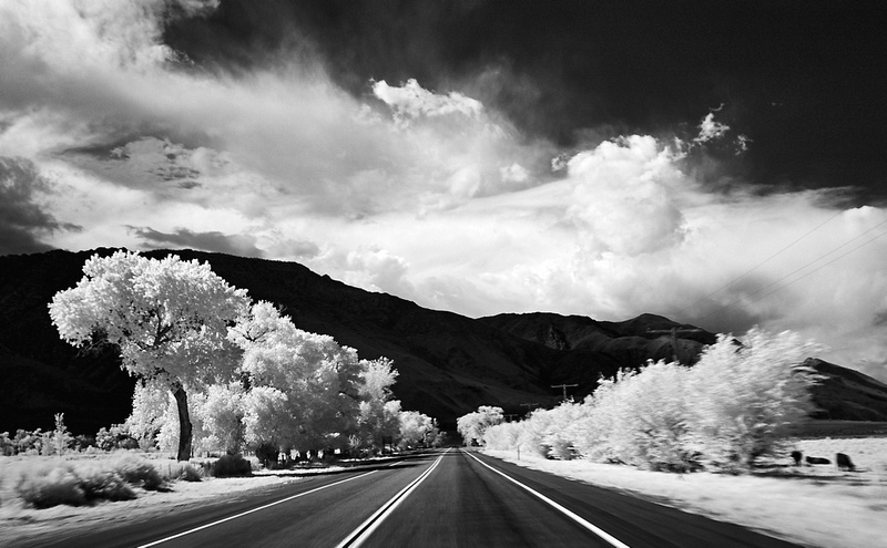 Sky, Mountains, Trees & Cattle – Infrared Exposure – Cartego, California – 2014