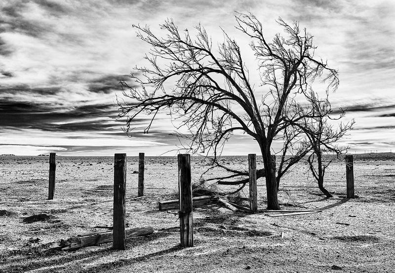 Lone Tree & Posts #2 - Abandoned Alfalfa Farm - Cinco, CA
