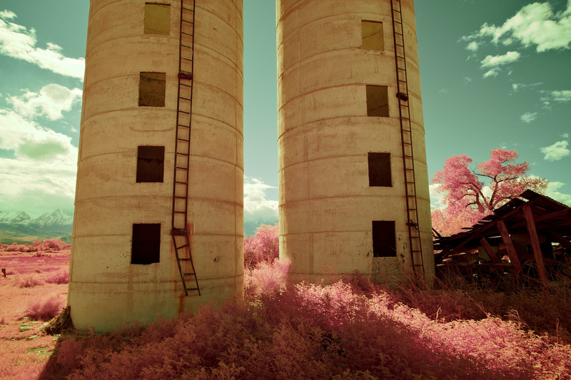 Twin Silos, Collapsed Building & Pink Foliage - Bishop, CA - 2016