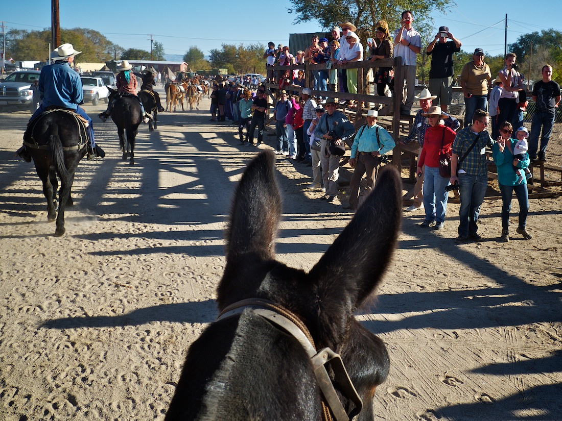 A Mule's View - Riding Party Arrives in Lone Pine, CA - 2013
