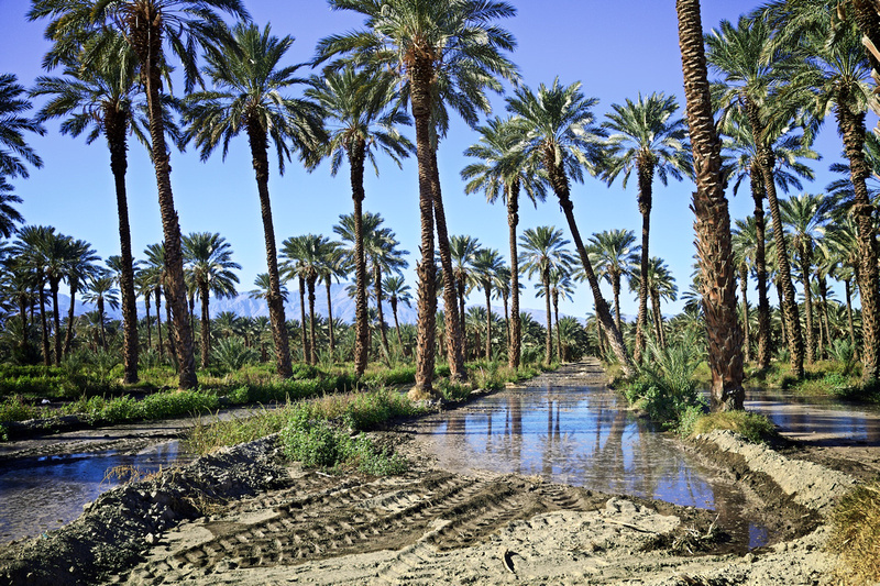 Flood Irrigation - Date Palm Grove off Grapefruit Blvd - Thermal, CA - 2015